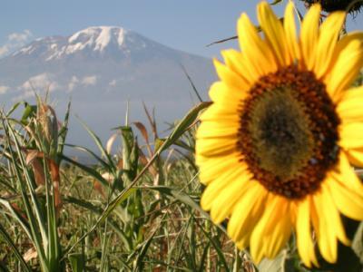 20080428175708-kilimanjaro-145-copia.jpg